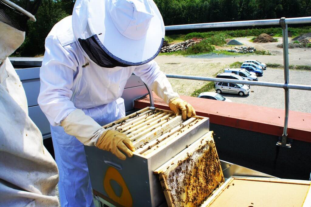 Atelier découverte des ruches VERTIC & ALPIC